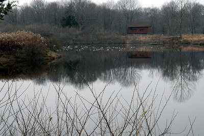 Bird Blind on Branda Pond