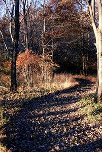 Oct 06 Walk 24