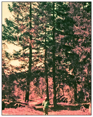 Kodak Ektramax 110 - Lomochrome Purple. Ramona Fall Trail April 2020.