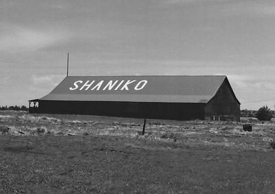 Shaniko | Olympus Pen FT | Derev Pan 200 | 2021/04/28