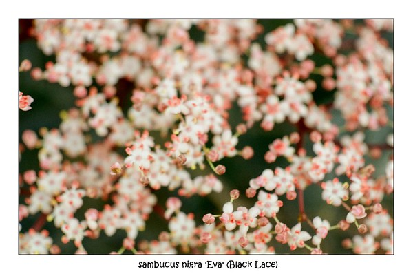 Garden Marcos | Olympus OM10 Zuiko Macro F3.5 50mm | Lomography CN100 | June 2021