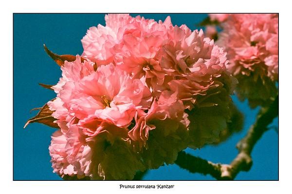 Macro Life   Pentax Super Program   Pentax SMC 50mm Macro   Fujicolor Superia 400 (Costco Expired)