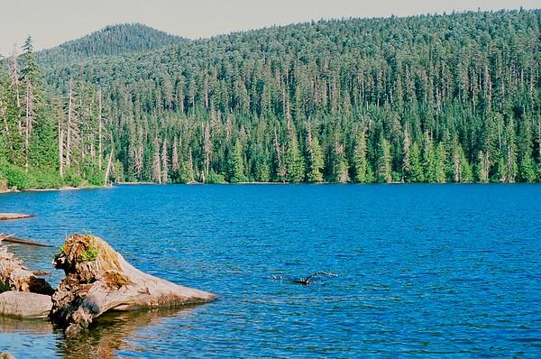 Wahtum Lake to Indian Mt. 2021/07/10   Pentax K1000   2004 Fujichrome Provia 100F