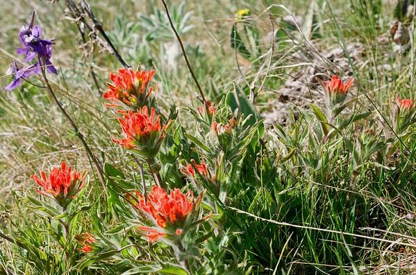 Dalles Mt Ranch Loop | Pentax Super | Kodak Pro Image 100 | 2021/04/18