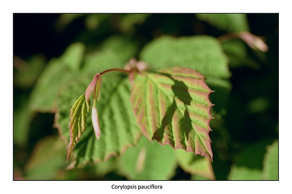 Garden Marcos | Olympus OM10 Zuiko Macro F3.5 50mm | Kodak Color Plus 200 | May 2021