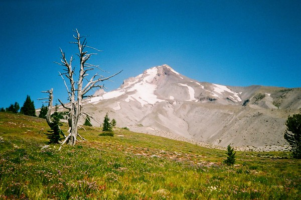 On Boy Scout Ridge, Mt. Hood. Olympus XA. Fujicolor Industrial.