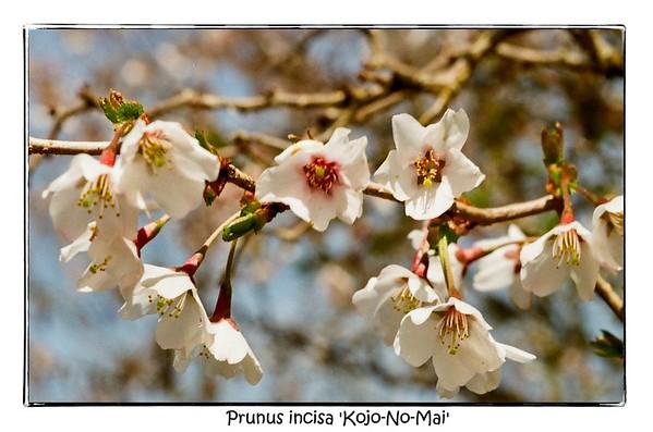 Macro Life | Pentax Super Program | Pentax 50mm Macro | Kodak Pro Image 100