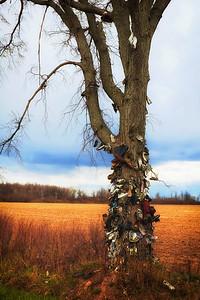 Shoe Tree-1