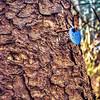 Tree Tag 507
