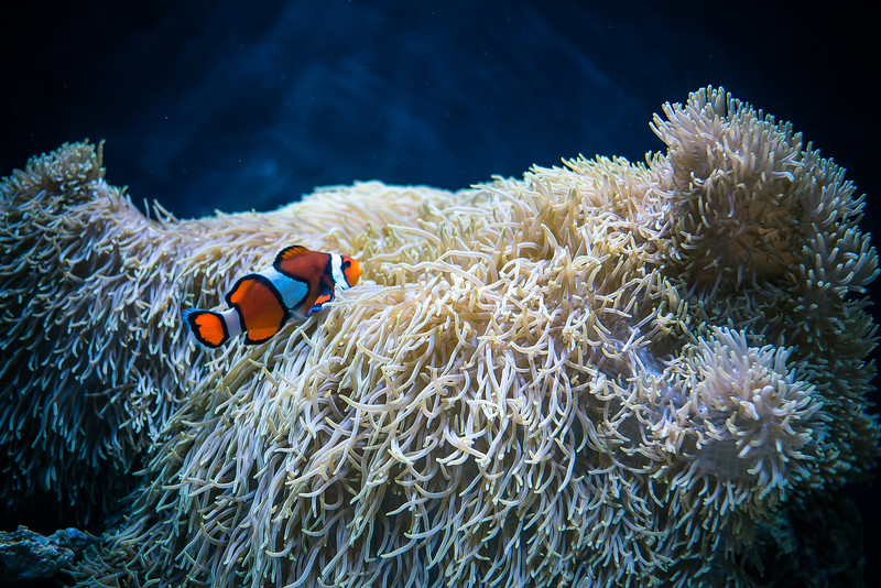 Clownfish Mansion