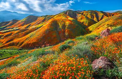 Walker Canyon Lake Elsinore Poppy Reserve Wildflower Superbloom Fine Art Landscape Photography  Elliot McGucken Fine Art Landscape Nature Photography Prints & Luxury Wall Art