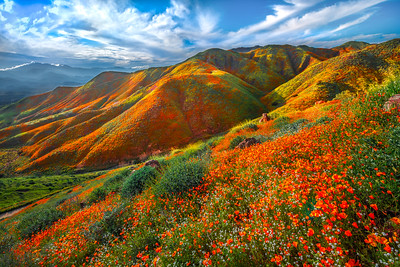 Walker Canyon Poppies Spring Symphony #1: Walker Canyon Lake Elsinore Poppy Reserve Wildflower Superbloom Fine Art Landscape Photography  Elliot McGucken Fine Art Landscape Nature Photography Prints & Luxury Wall Art