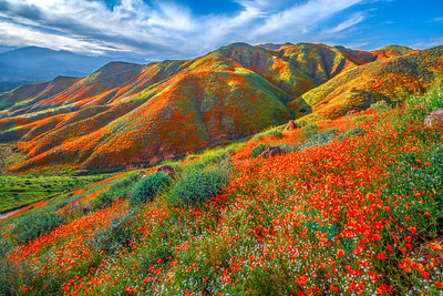 Walker Canyon Poppies Spring Symphony #5: Walker Canyon Lake Elsinore Poppy Reserve Wildflower Superbloom Fine Art Landscape Photography  Elliot McGucken Fine Art Landscape Nature Photography Prints & Luxury Wall Art