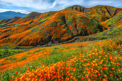 Walker Canyon Poppies Spring Symphony #3: Walker Canyon Lake Elsinore Poppy Reserve Wildflower Superbloom Fine Art Landscape Photography  Elliot McGucken Fine Art Landscape Nature Photography Prints & Luxury Wall Art