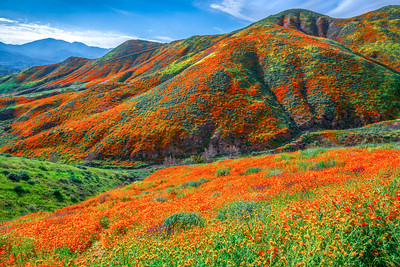 Walker Canyon Poppies Spring Symphony #4: Walker Canyon Lake Elsinore Poppy Reserve Wildflower Superbloom Fine Art Landscape Photography  Elliot McGucken Fine Art Landscape Nature Photography Prints & Luxury Wall Art
