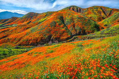 Walker Canyon Poppies Spring Symphony #8: Walker Canyon Lake Elsinore Poppy Reserve Wildflower Superbloom Fine Art Landscape Photography  Elliot McGucken Fine Art Landscape Nature Photography Prints & Luxury Wall Art