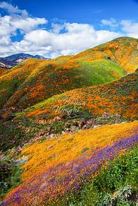 Walker Canyon Colors