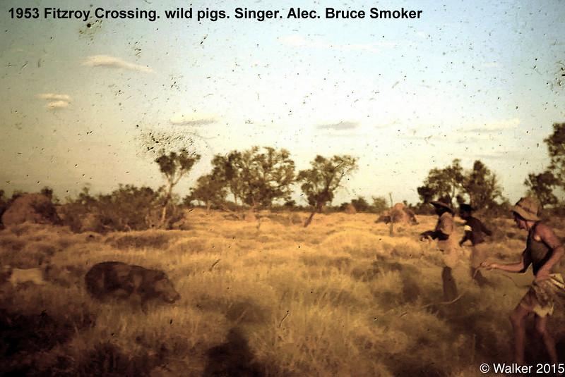 1953 Fitzroy Crossing. wild pigs. Singer. Alec. Bruce Smoker.