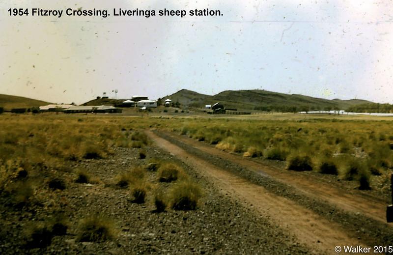 1954 Fitzroy Crossing. Liveringa sheep station