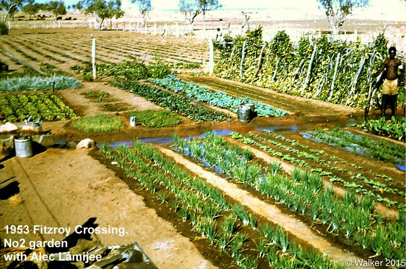 1953 Fitzroy Crossing. No2 mission vegetable garden. Alec Lamijee.
