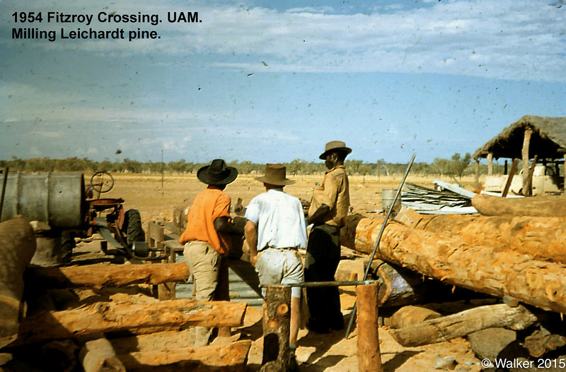 1954 Fitzroy Crossing. UAM milling Leichardt pine