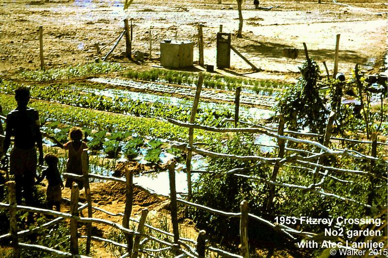 1953 Fitzroy Crossing. No2 garden with Alec Lamijee