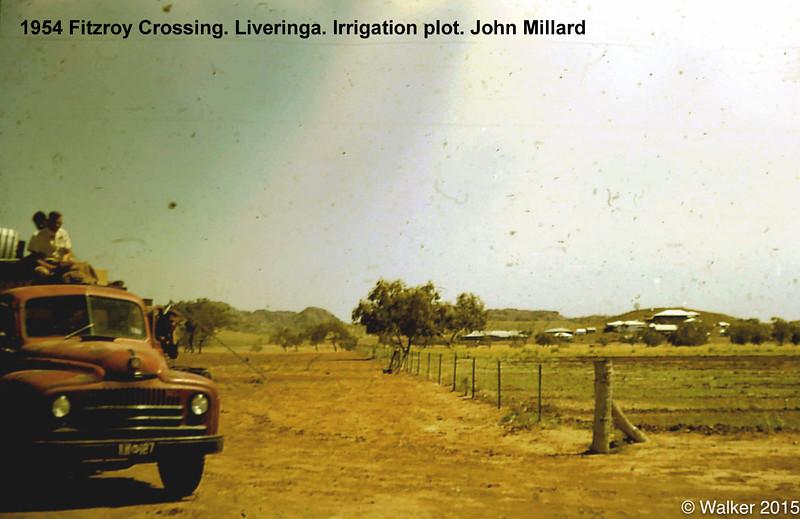 1954 Fitzroy Crossing. Liveringa. Irrigation plot. John Millard
