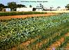 1976 Mission garden