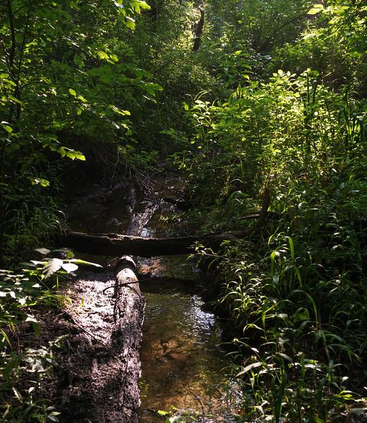 Trails at Baker Woods Preserve