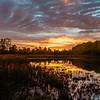 Sunrise, Lily Park