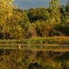 Reflection - Lillie Park