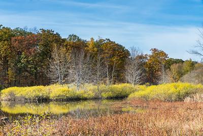 Fall colors across the River Raisin at the Nan Weston Preserve