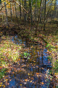 Leafy Stream at the Nan Weston Preserve