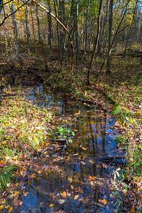 Leafy Stream at the Nan Weston Preserve