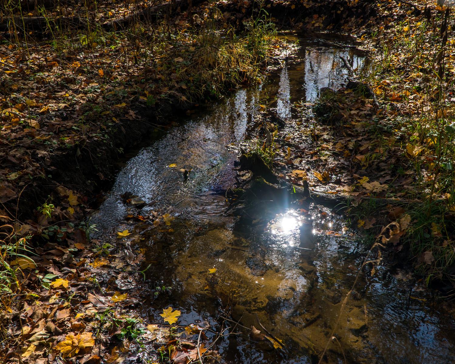 Reflections at the Nan Weston Preserve