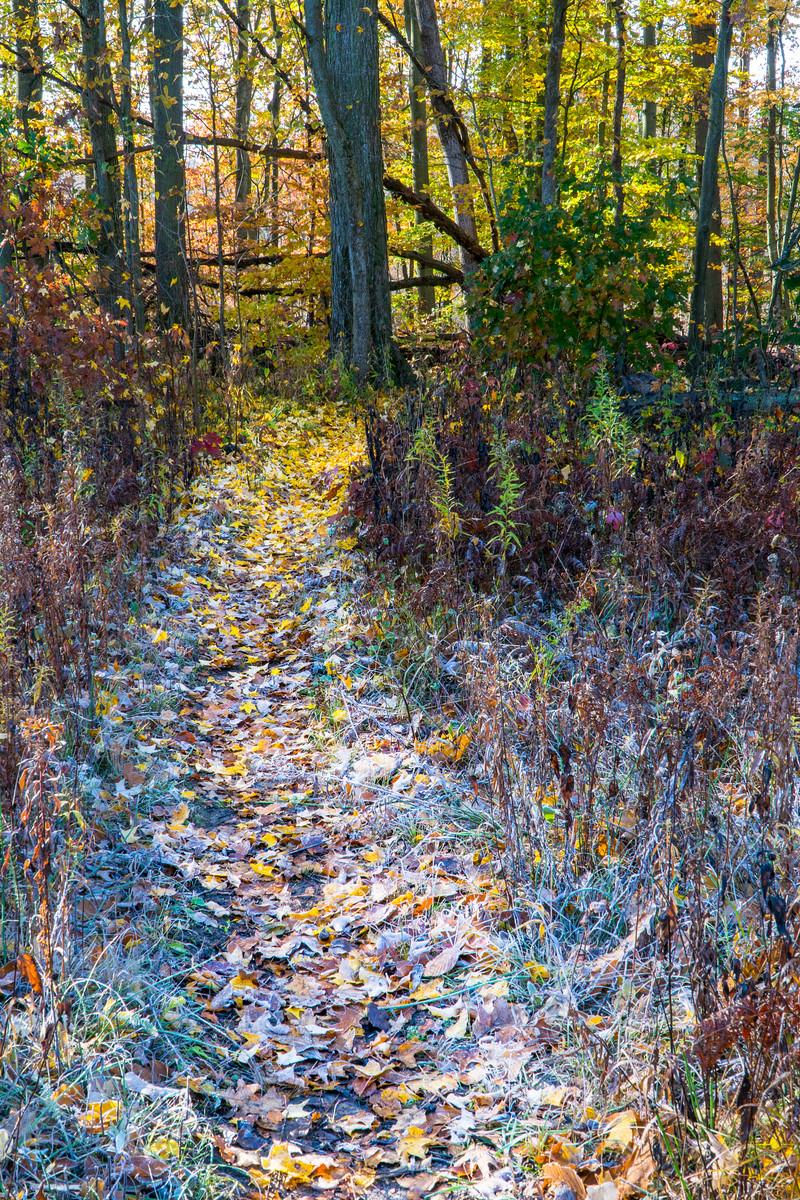 Autumn Frosty Trail
