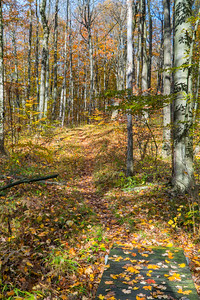 Autumn Trail at the Nan Weston Preserve