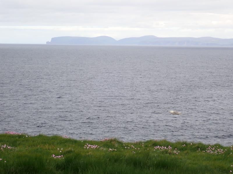 Dramtic cliffs and Caithness slate