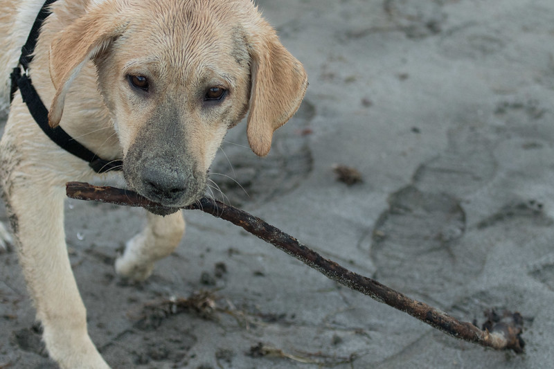 I Have a Stick