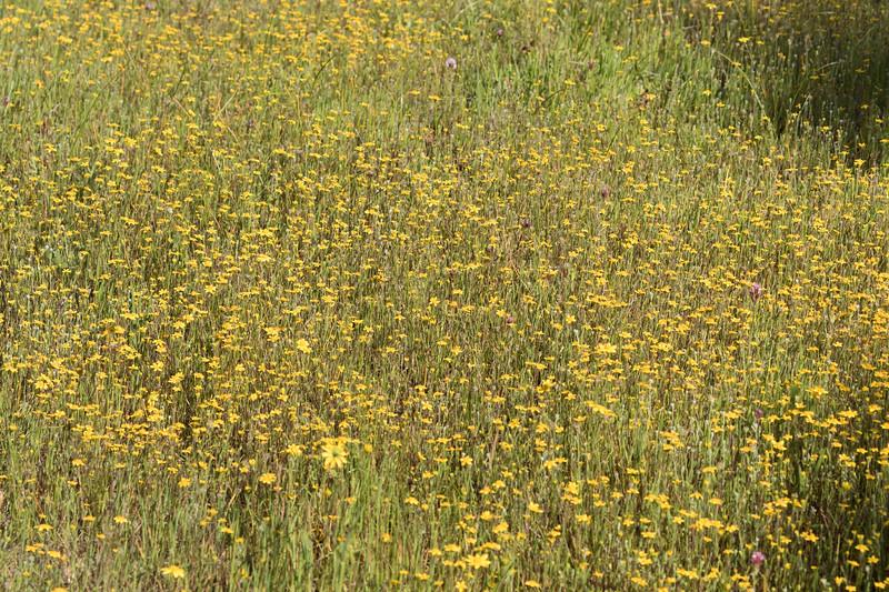 So many wildflowers