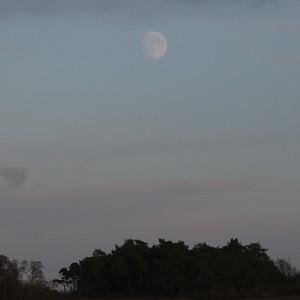 The nearly full moon