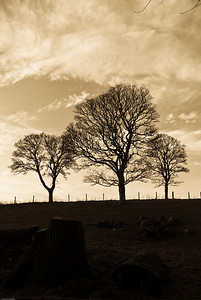 Fyvie Castle Trees (1 of 2)