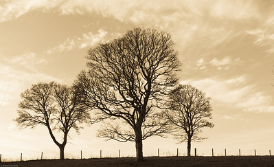 Fyvie Castle Trees (2 of 2)