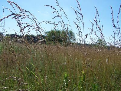 Meadow Preserve Habitat Walk - 6/19/2010