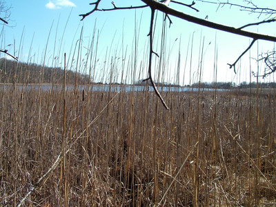Nonquitt Marsh.  photo by Larry Brownell