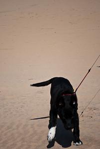 Rattray Head Beach-7