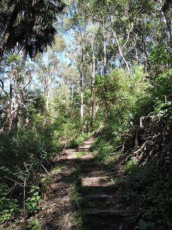 Wodi Wodi Track, Stanwell Park, NSW - Australia