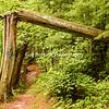 Lake Itasca Trail - Broken Tree
