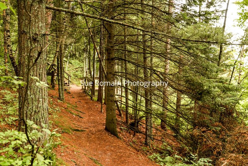 Lake Itasca Trail