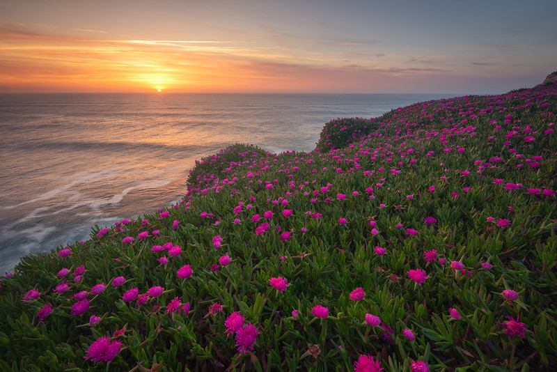 Blooming sunset
